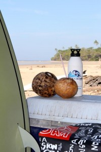 Fresh coconuts ready to drink when you get out of the water each day.