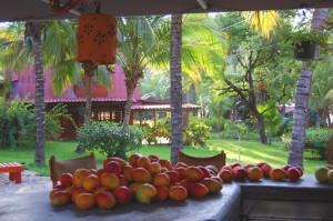Mango season is the season to visit Peaks n Swells